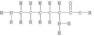 amino acid (lysine)