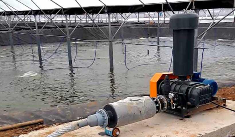 Cung cấp Máy sục khí Nuôi Tôm tại Hà Nội