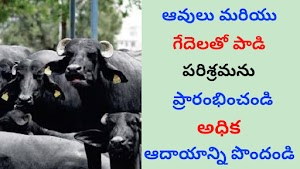 Dairy form business in telugu