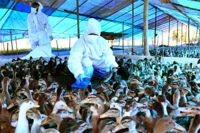 After Maharashtra, bird flu has been confirmed in Delhi as well