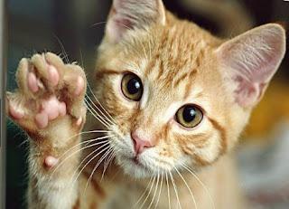 Arti Mimpi Di Cakar Kucing