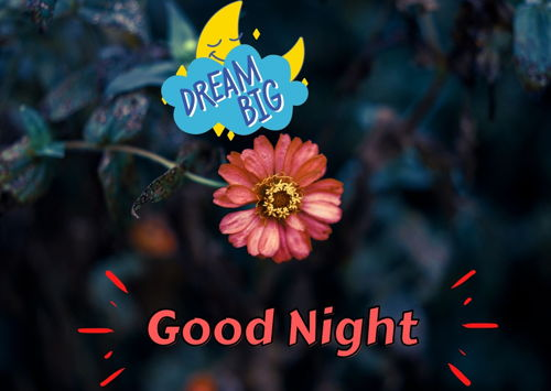 good-night-flower-images-hdgood-night-flower-images-hd
