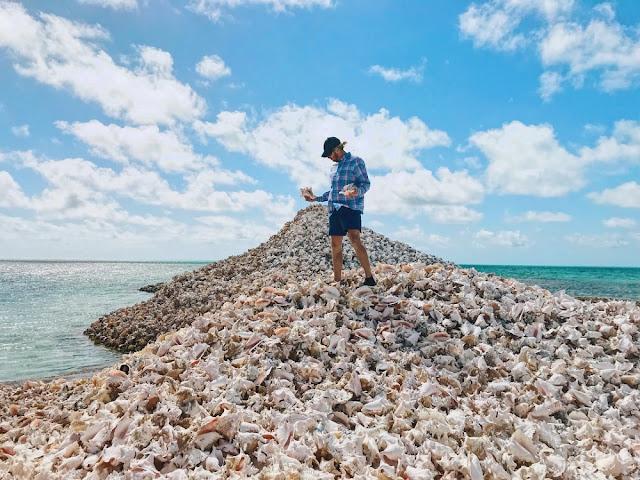 conchs, british virgin islands, conch seafood, conch shell, conch seashell, conch out of shell, sea conch, conch island, anegada island, large conch shell, conch without shell, conch shell location, huge conch shell, conch shell island, conch shell meaning, conch food