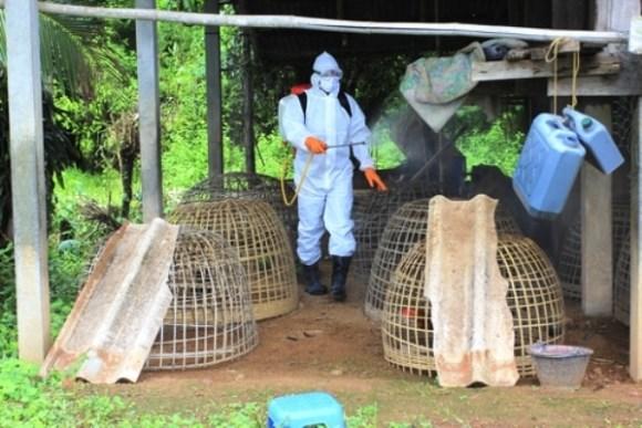 Hà Nội xuất hiện ổ dịch cúm A/H5N6
