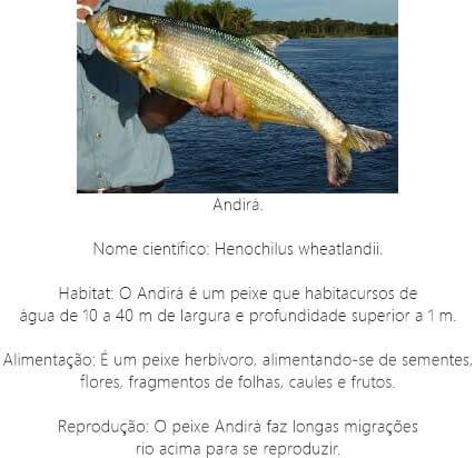 Peixe-Andira
