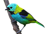 Bird PNG Transparent Photo Download Free