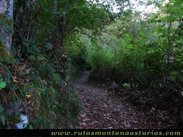 Ruta de los Arrudos y Corteguerón: Zona de bosque