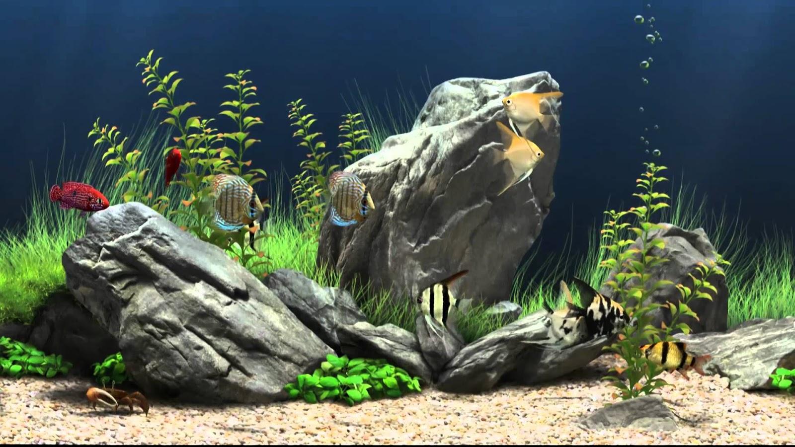 Fond d'écran fond marin animé gratuit - Fonds d'écran HD