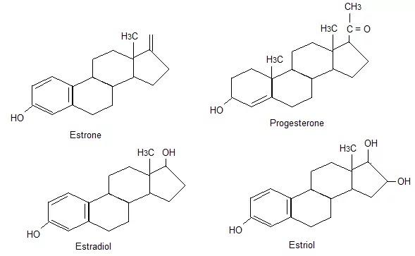 principal in male sex hormones