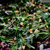 Sautéed Greens with Cranberry and Pistachio