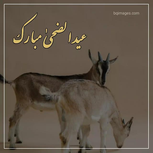 eid ul zuha image