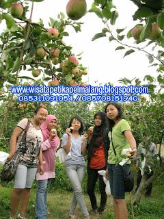 wisata petik apel|petik apel|petik apel di malang|petik apel malang|apel malang