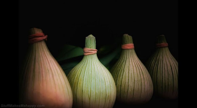 Still life from bulbs. (Photo by RORY MCDONALD):