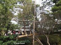 Shrub supports - Kenrokuen-garden, Kanazawa, Japan