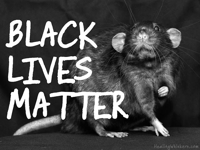 Franklin the Therapy Rat and Black Lives Matter