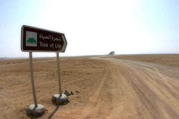 تعرفوا على شجرة الحياة فى البحرين qK9cr-600x400.jpg