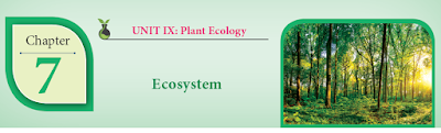 CLASS 12 BIOLOGY BOTANY - CHAPTER 7 ECOSYSTEM - 1 MARK QUESTIONS - ONLINE TEST