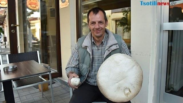 Μανιτάρι για ρεκόρ Γκίνες στον Αυγερινό Κοζάνης