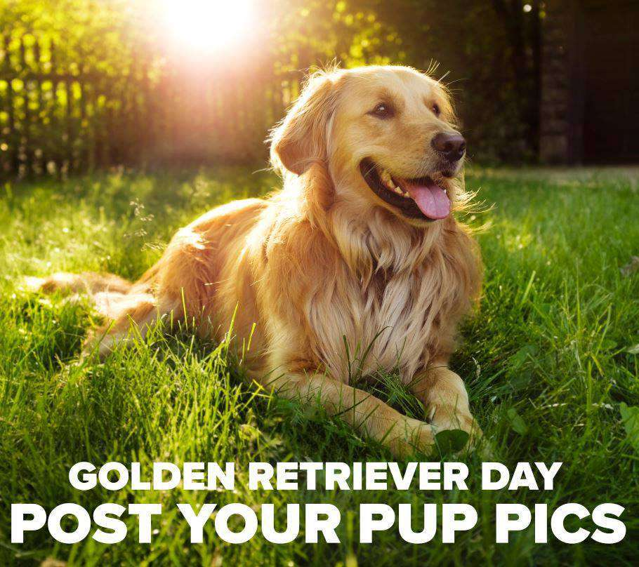 National Golden Retriever Day Wishes Sweet Images
