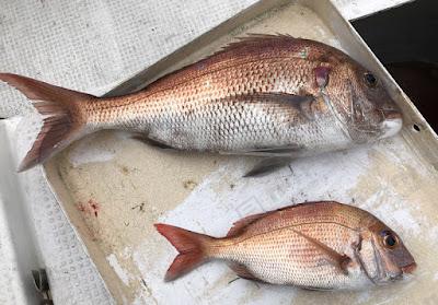 プレジャーボートでの海釣り 2020/10/19の釣果