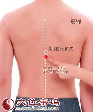 筋縮穴位 | 筋縮穴痛位置 - 穴道按摩經絡圖解 | Source:xueweitu.iiyun.com