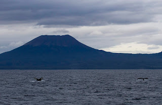 Missing Hawaiian humpback whales? They re staying late in Alaskan waters, but it s still not certain why.