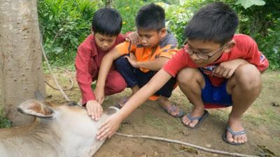Anak kecil nonton penyembelihan hewan kurban
