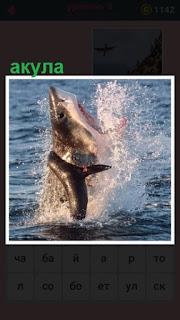 651 слов 8 уровень из воды выскочила акула