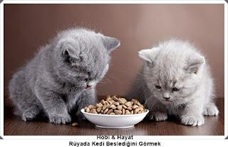 Kedi Rüyaları - Rüya Yorumları
