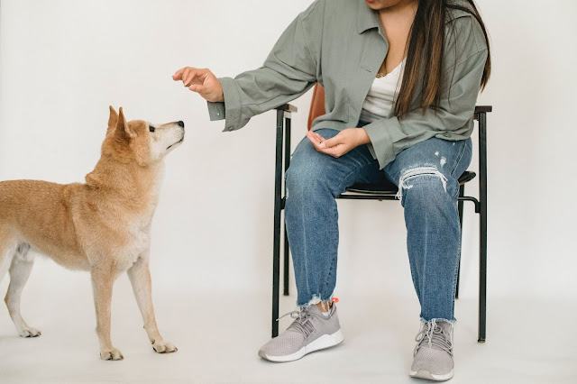 Dog Training Involves Much More Than Just Having a Well-Behaved Dog