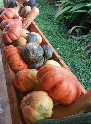 Registro-SP terá Feira de Agroecologia a partir deste sábado, dia 16