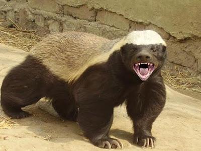 bal-porsugu-nasil-bir-hayvan