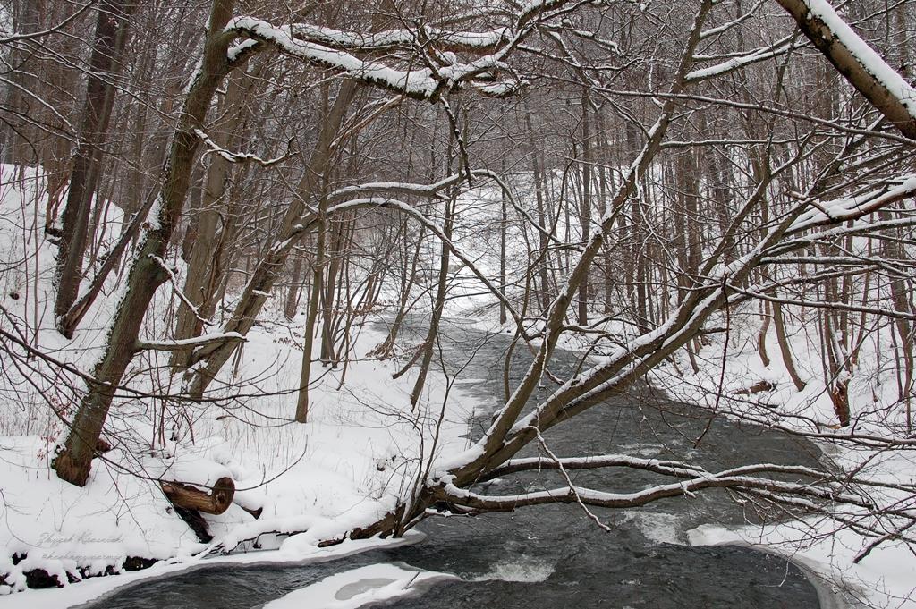Olsztyn | Las Miejski, rzeka Łyna i potęga zimy