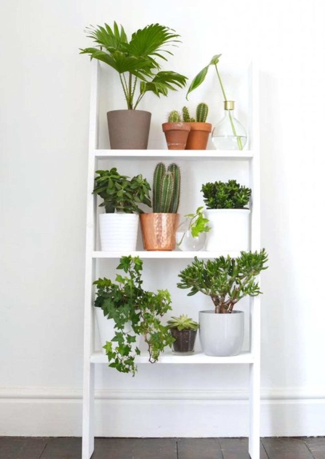 Decorar con plantas - Decorar con plantas el salon ...