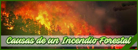 Banner 159 VerdeZona