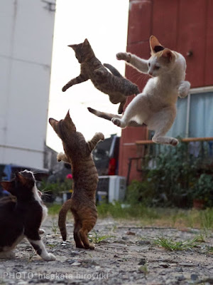 Japanese Photographer Captures Ninja Cats in Ameowzing Action Shots