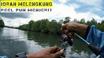 cara mancing ikan patin liar