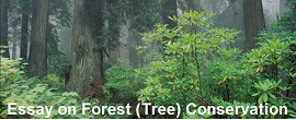 Essay on Forest (Tree) Conservation for Class 6, 7, 8, 9 & 10