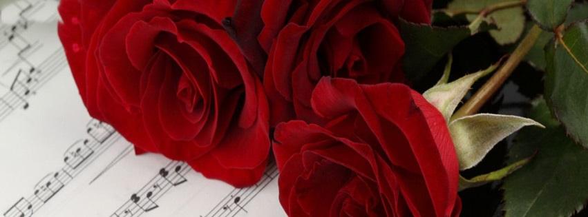 Cute Teddy Bears Wallpapers Hd Red Rose Facebook Timeline Covers Fb Status