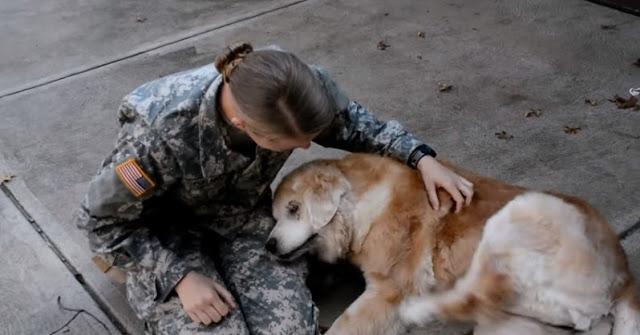 Пожилая собака не может перестать плакать, когда хозяин наконец возвращается домой
