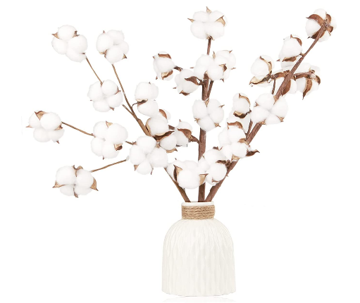 cotton dried flowers