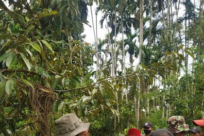 Bupati Pidie Abusyik Jak Panto Hase Tanaman Organik u Geumpang