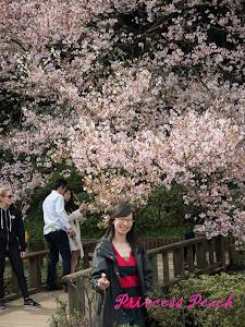 新宿御苑池邊美景