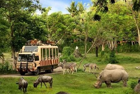 Tiket Masuk Bali Safari