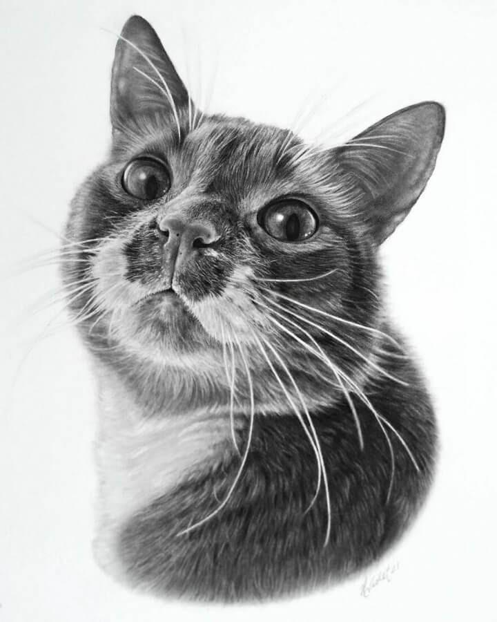 10-Curious-cat-Helen-Violet-www-designstack-co