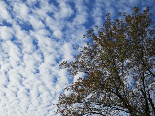 mackeral sky against a tree