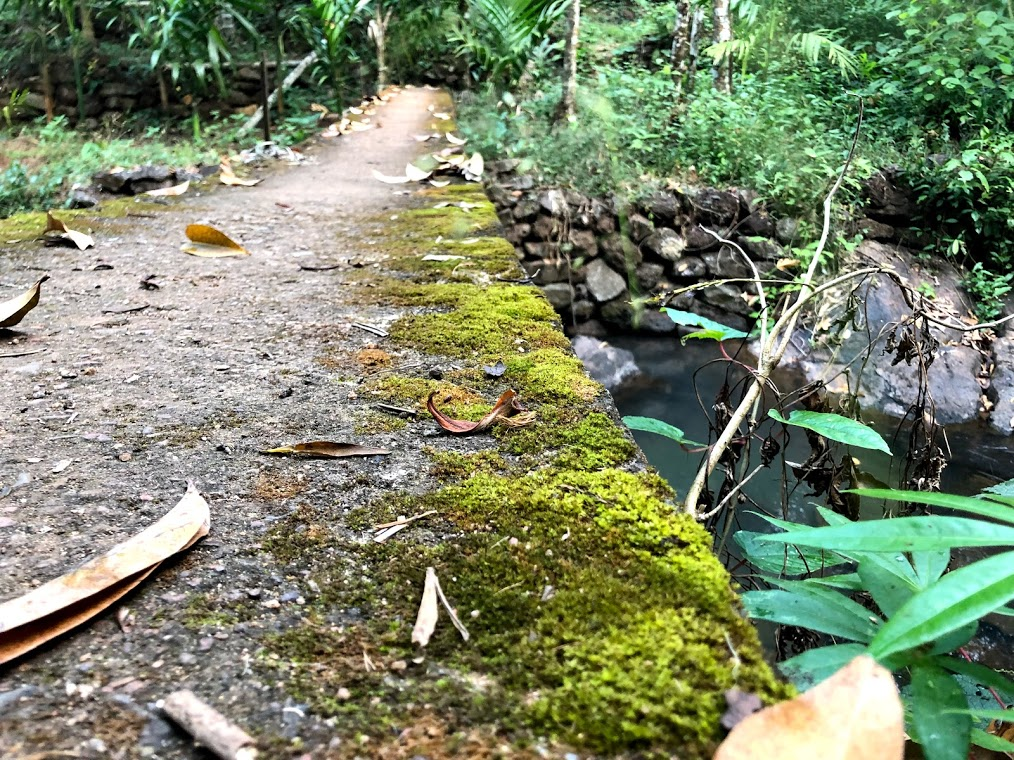 Parule Water Stream Bridge