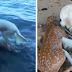 Καλόκαρδος σκύλος βουτάει στο νερό και σώζει ελαφάκι που πνίγεται!