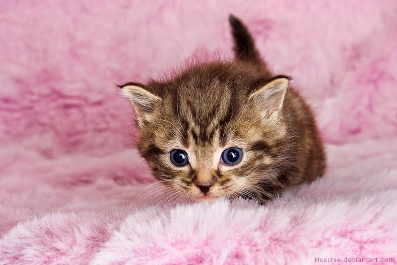 Gambar Kucing Lucu 150 Gambar Gambar Com My