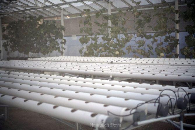 Agrowisata Amanah Karanganyar menanam sayuran sendiri